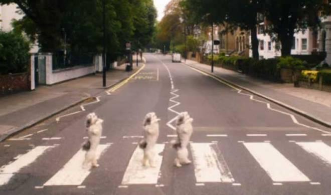 Thrice adorable? Pudsey does his Beatles Abbey Road impression. (Photo courtesy of Vertigo Films)