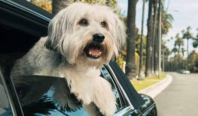 """""""Pudsey the Dog: The Movie"""" (photo courtesy of Vertigo Films)"""